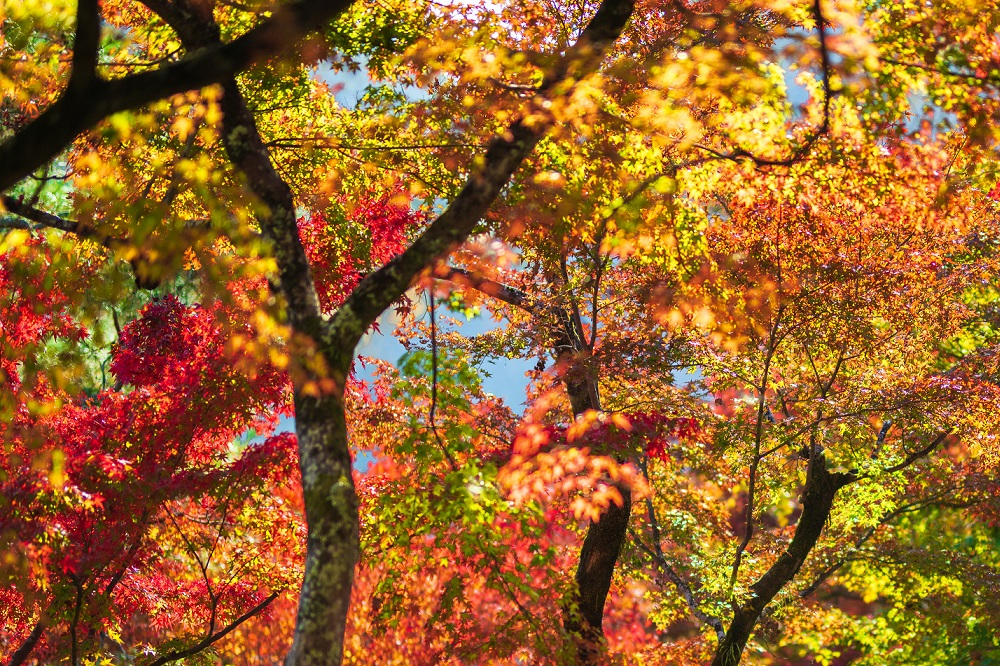 Autumn leaves decorate a Colorful of beautiful nature